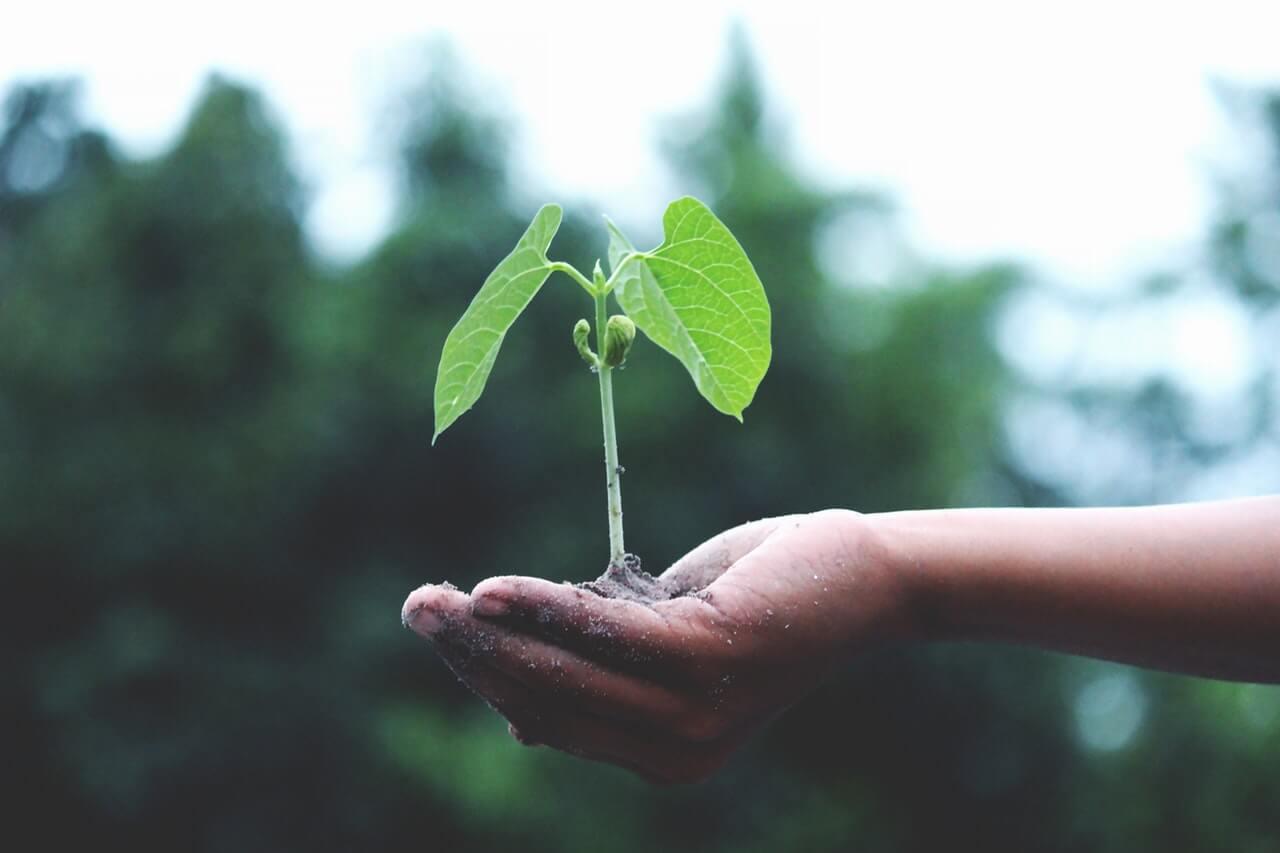lista-deseos-hacer-antes-morir-planta-arbol